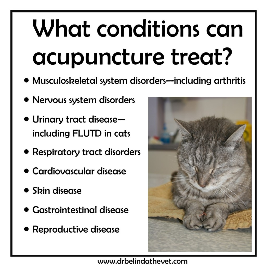 Acupuncture slides