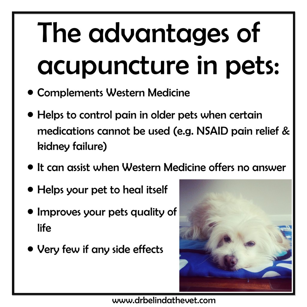 Acupuncture slides 3