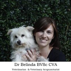 Dr Belinda the Vet logo square 250