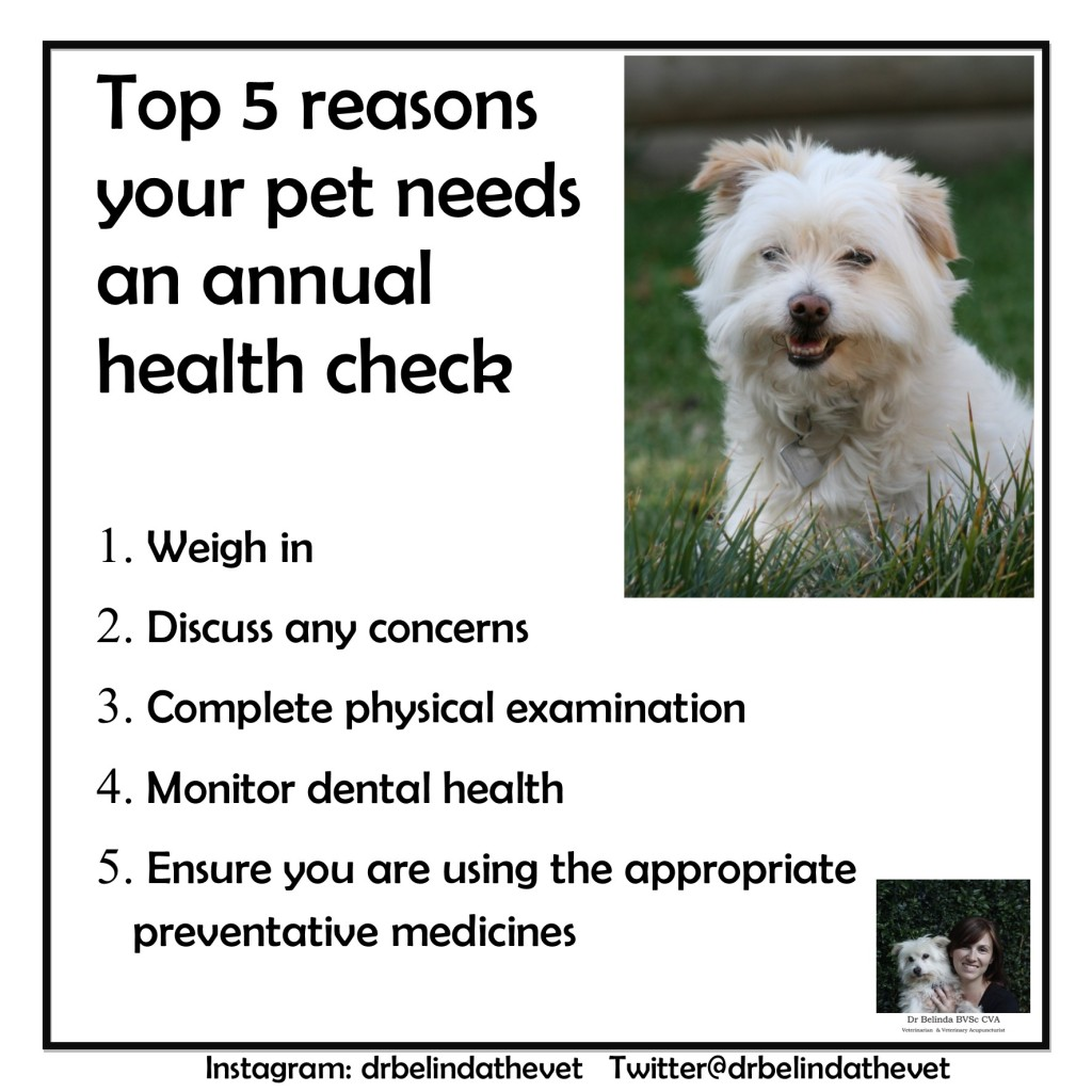 Top 5 reasons your pet needs an annual health check