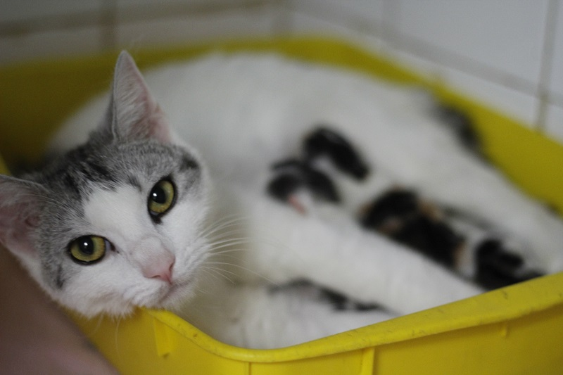 responsible pet ownership 2
