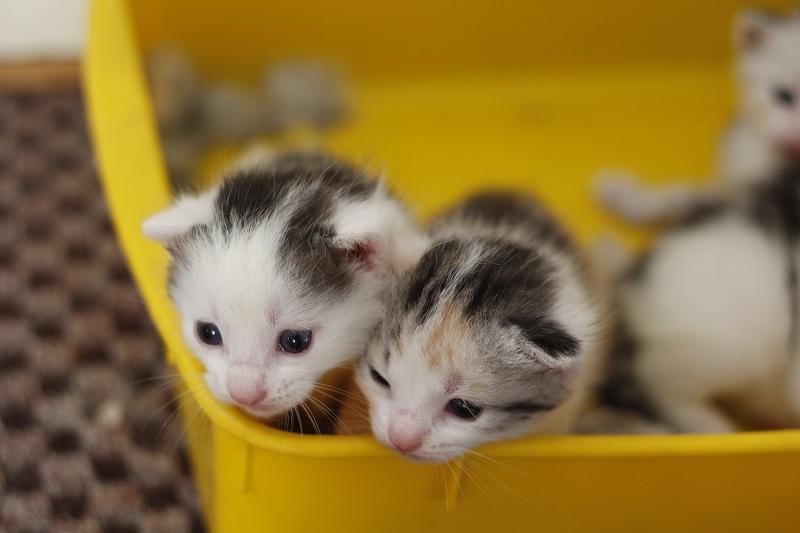 responsible pet ownership 3