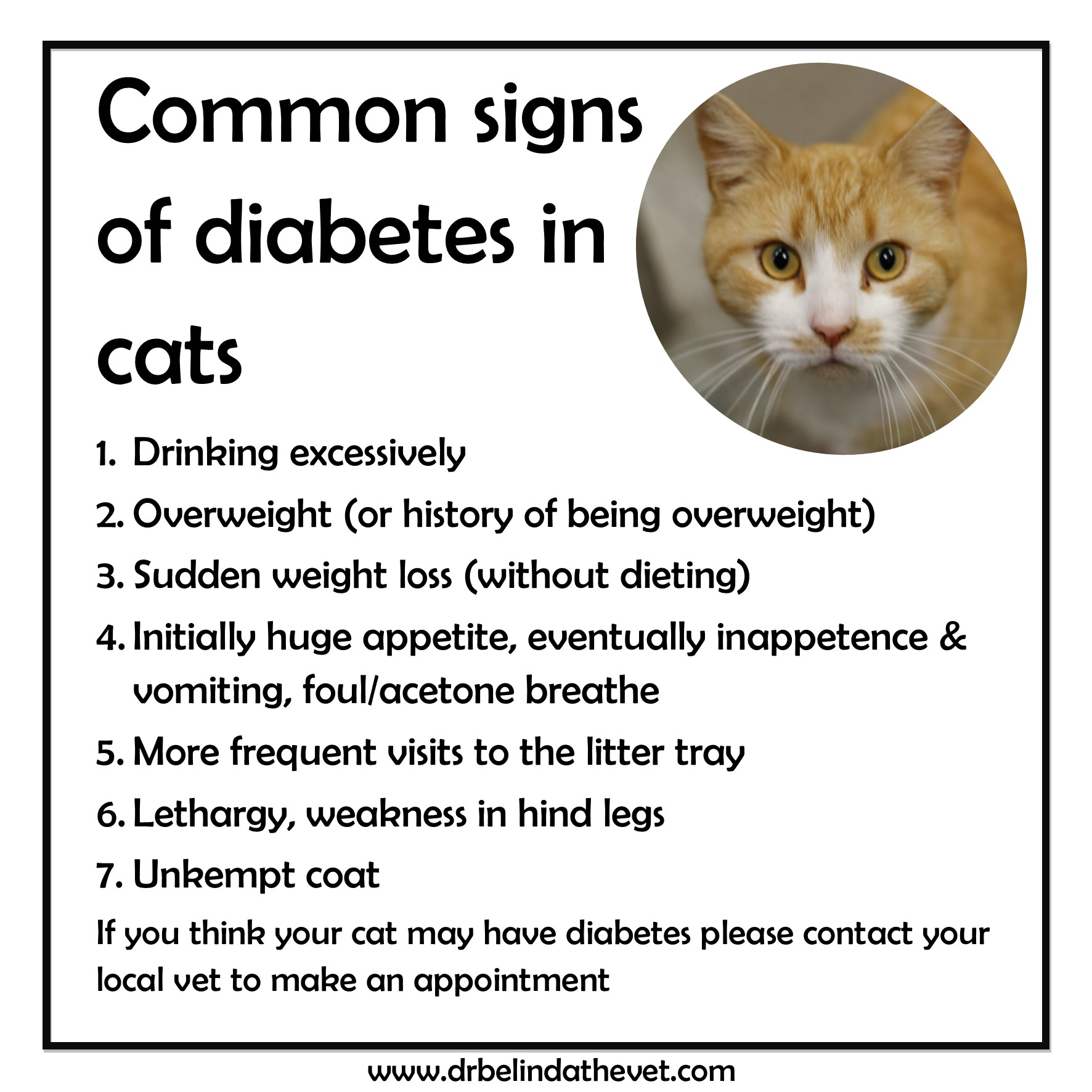 Signs your cat may have diabetes