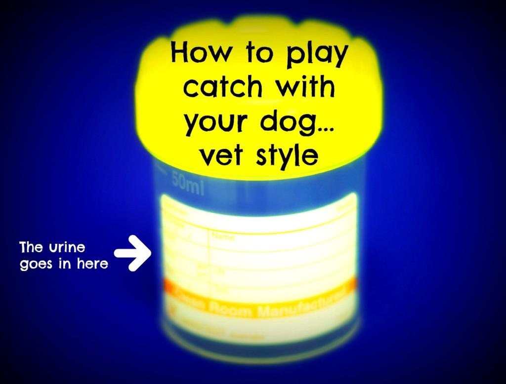 Urine - play catch
