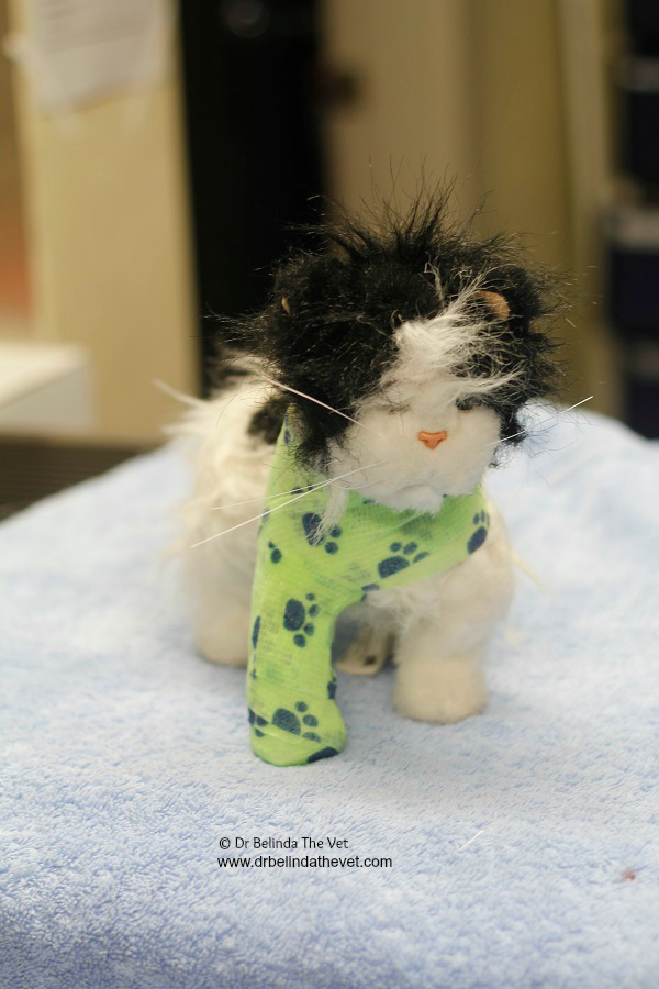 Part of Jesse's treatment was to apply a splint to keep his leg stable. This splint will need to stay on for a few weeks before it is removed.
