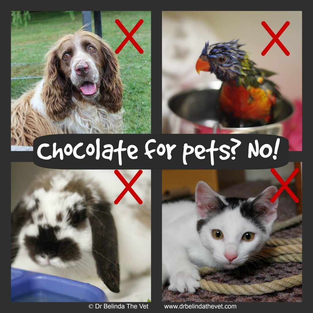 Chocolate for pets is a big NO NO - it can cause seizures and death!