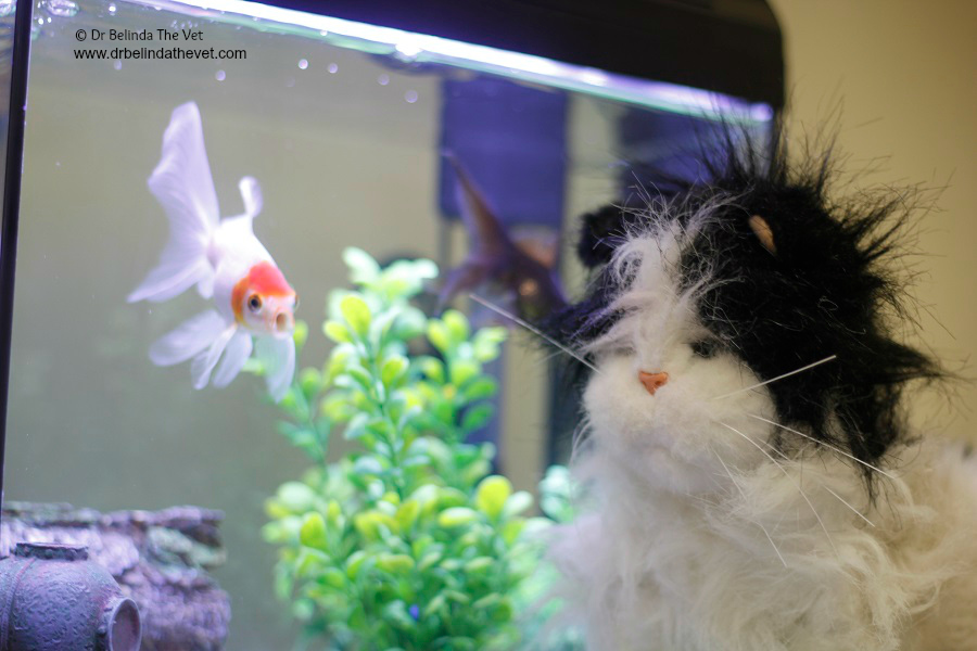 Jesse started his visit in the office with me. Whilst I was working he spent time watching the fish. He liked watching the fish!