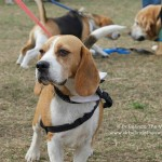 This handsome dog was one of many enjoying their time at the RSPCA Million Paws Walk in Sydney