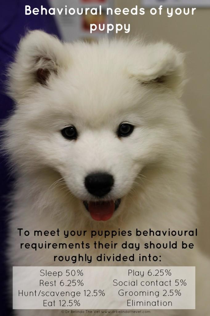 Behavioural needs of your puppy