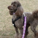 Now, if anyone was rocking the poodle hair cut it was Zoe!