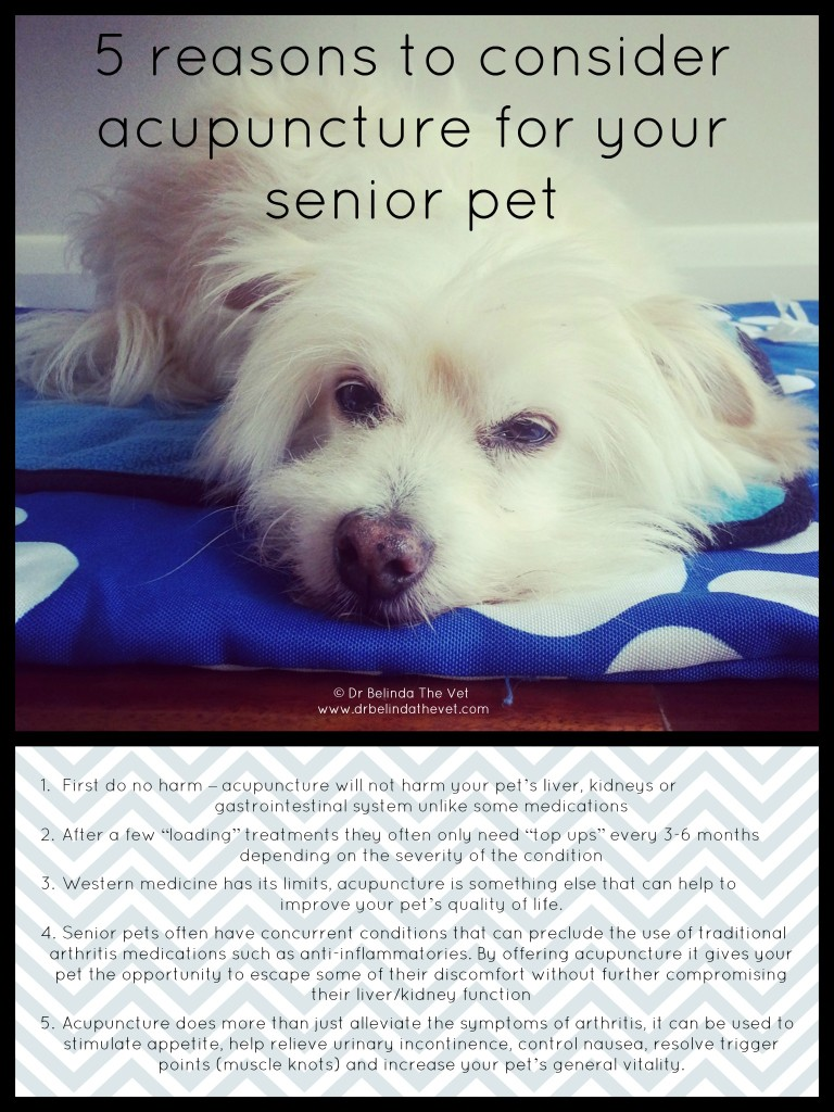5 reasons to consider acupuncture for senior pets