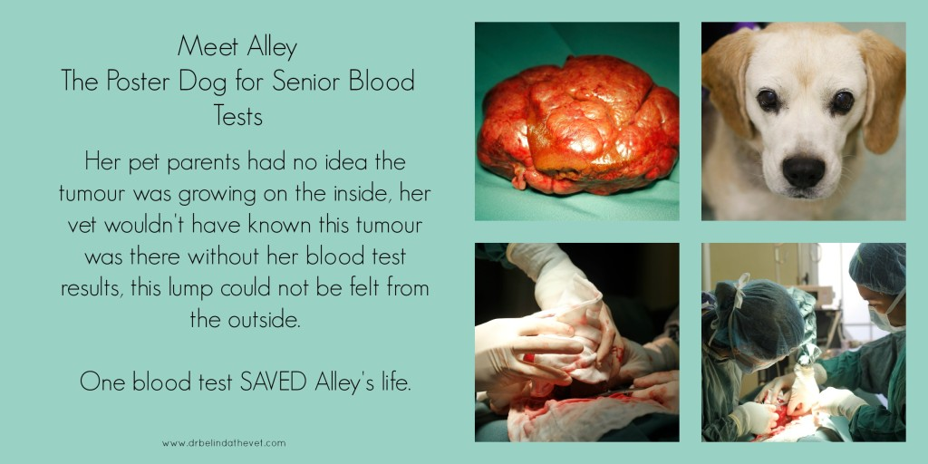 Alley is the poster dog for senior blood tests. Her pet parents had no idea the tumour was growing on the inside, her vet wouldn't have known this tumour was there without her blood test results, this lump could not be felt from the outside.  One blood test SAVED Alley's life.