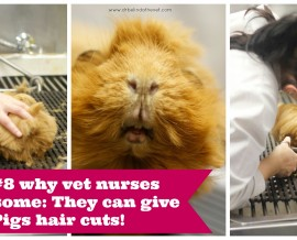 50 Reasons why vet nurses are AWESOME!
