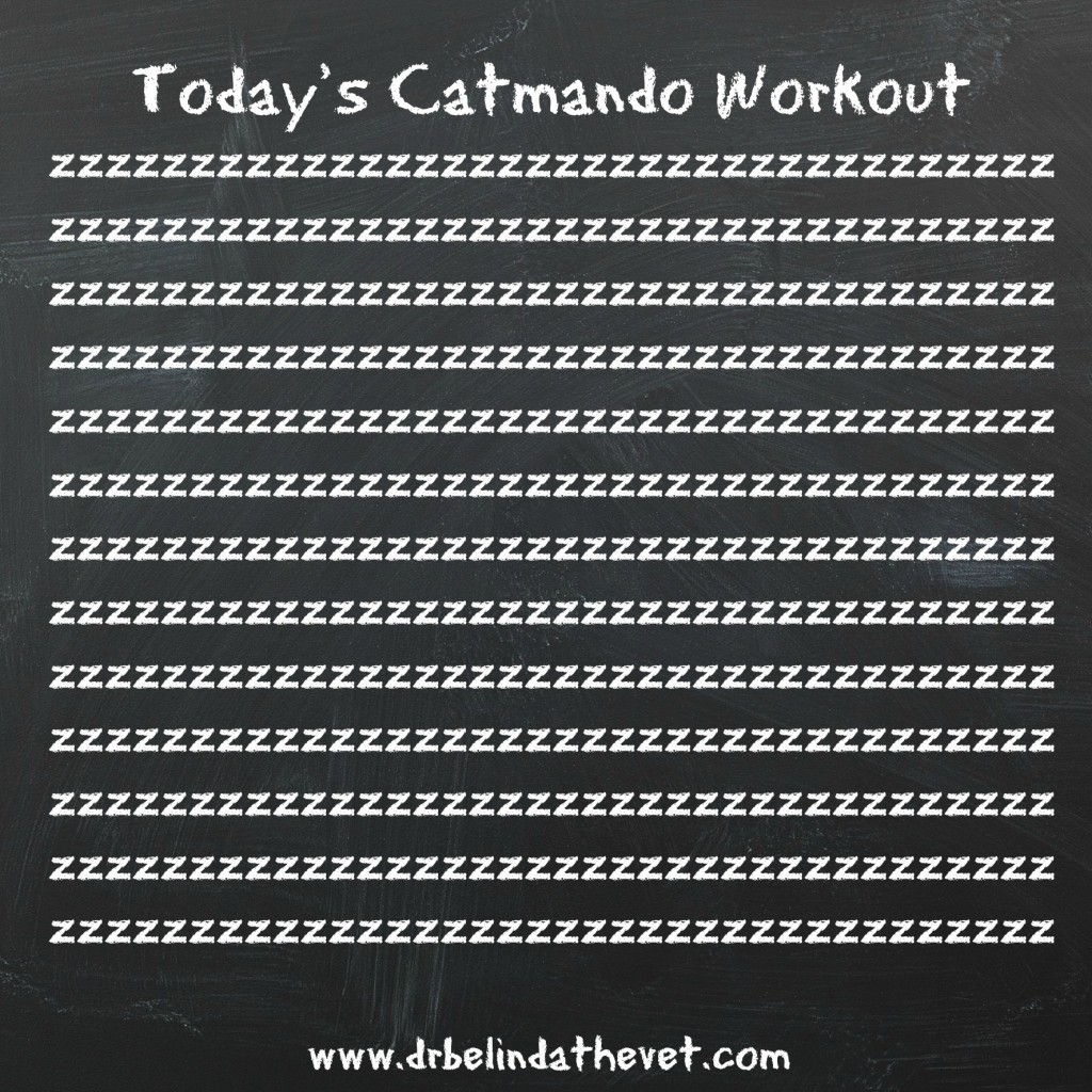 Catmando Workout 2