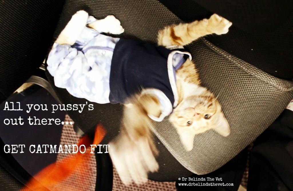 Get catmando fit