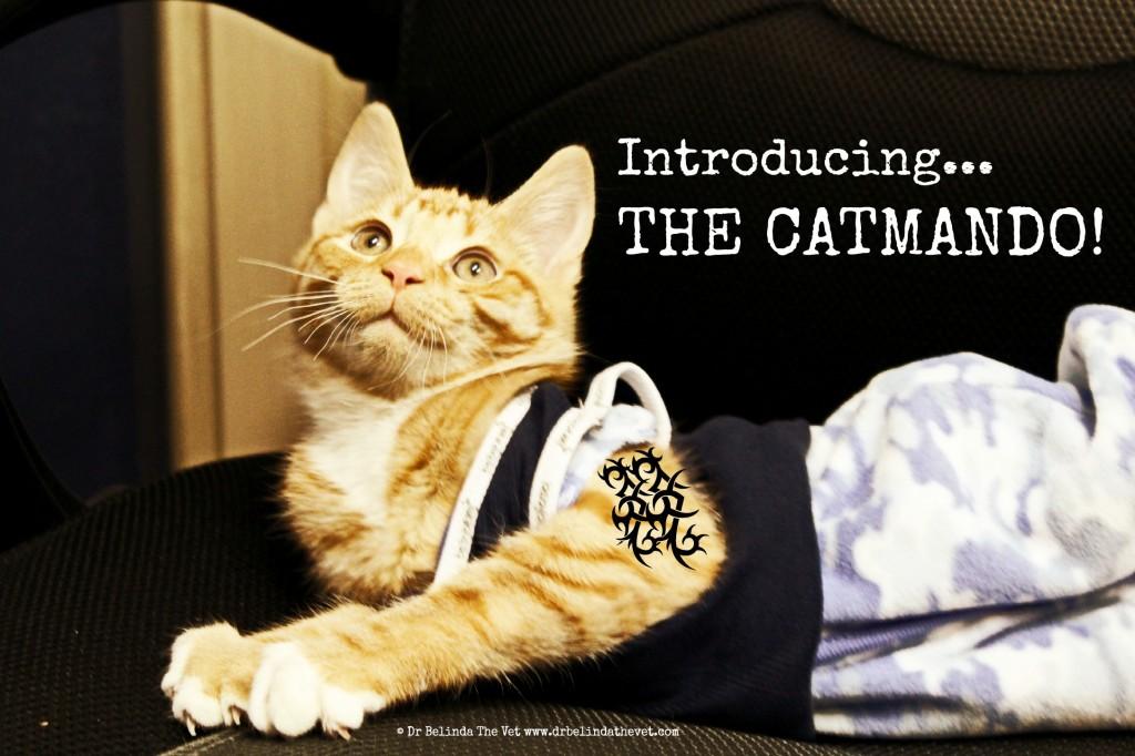 Introducing the catmando
