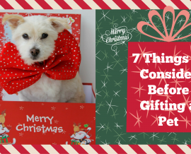 7 Things to Consider Before Gifting a Pet