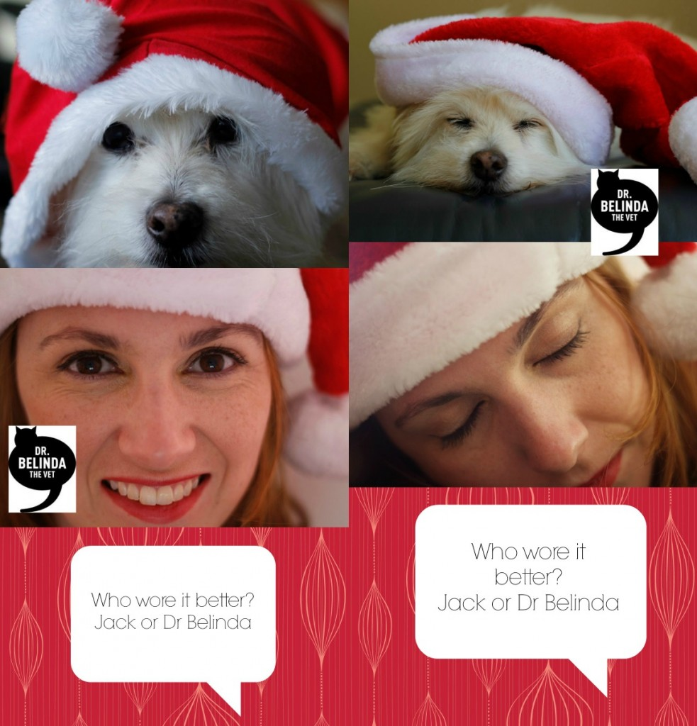 Who wore it better... the santa hat - awake and asleep...