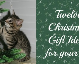 12 Christmas Gift Ideas for your cat