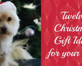 12 Christmas gift ideas for your dog
