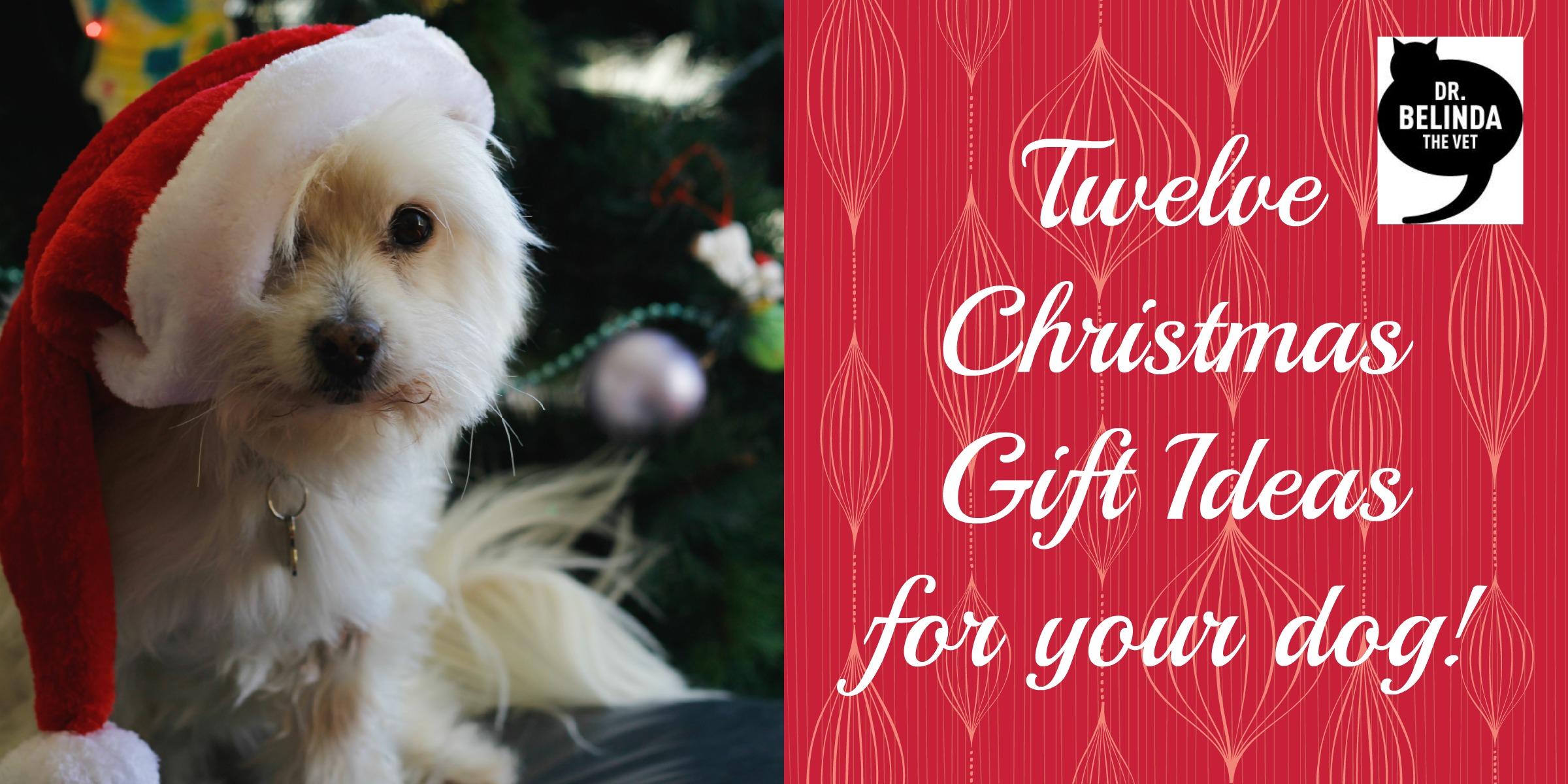 12 Christmas gift ideas for your dog - Dr Belinda The Vet