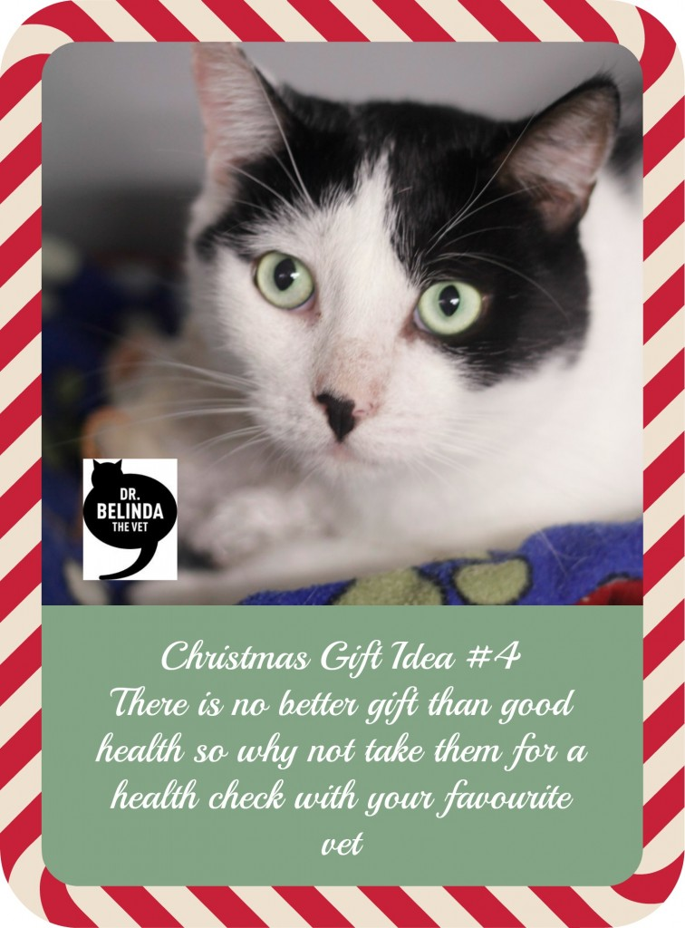 Christmas Gift Idea for cats - There is no better gift than good health so why not take them for a health check with your favourite vet