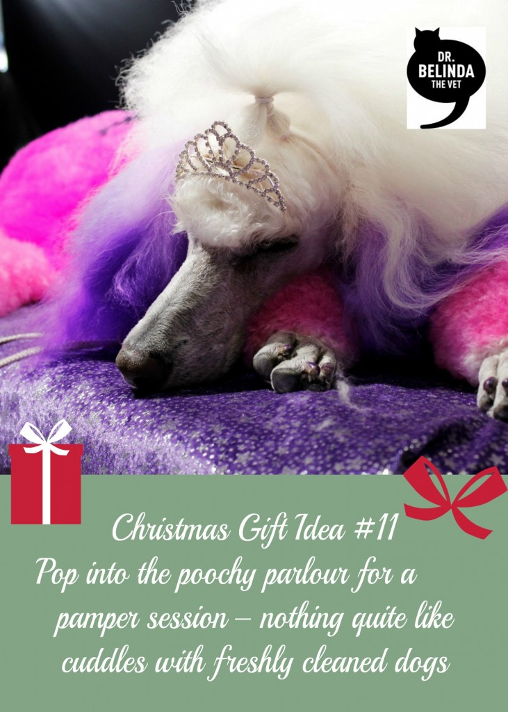 Christmas gift idea #11 - Drop into the poochy palour for a pamper session