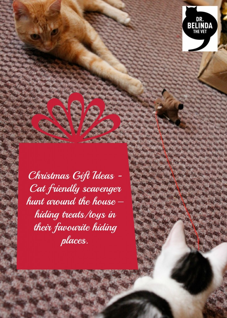 Christmas gift idea - Cat friendly scavenger hunt around the house – hiding treats/toys in their favourite hiding places.