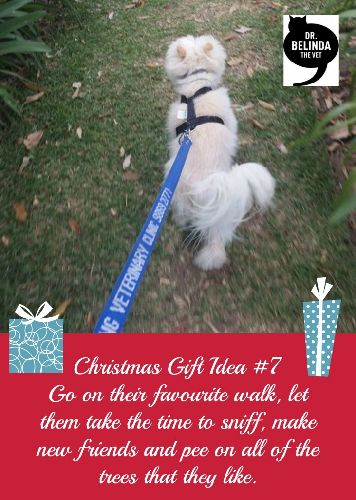Gift Idea #7 - Go on their favourite walk, let them take the time to sniff, make new friends and pee on all of the trees that they like.