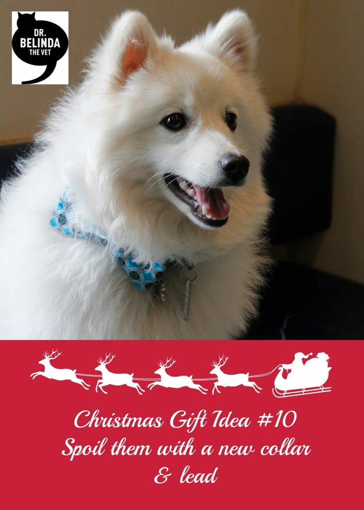 Christmas Gift idea 10 - Spoil them with a new collar & lead