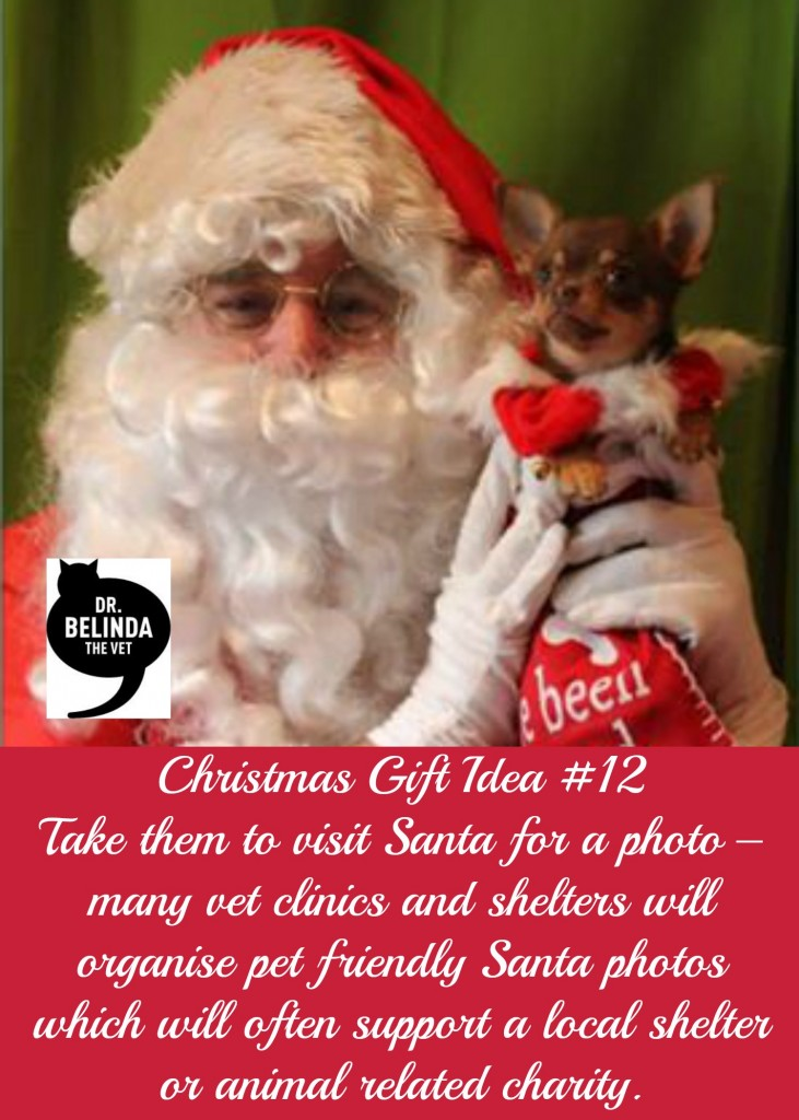 Christmas Gift idea for your dog - Take them to visit Santa for a photo – many vet clinics and shelters will organise pet friendly Santa photos which will often support a local shelter or animal related charity.