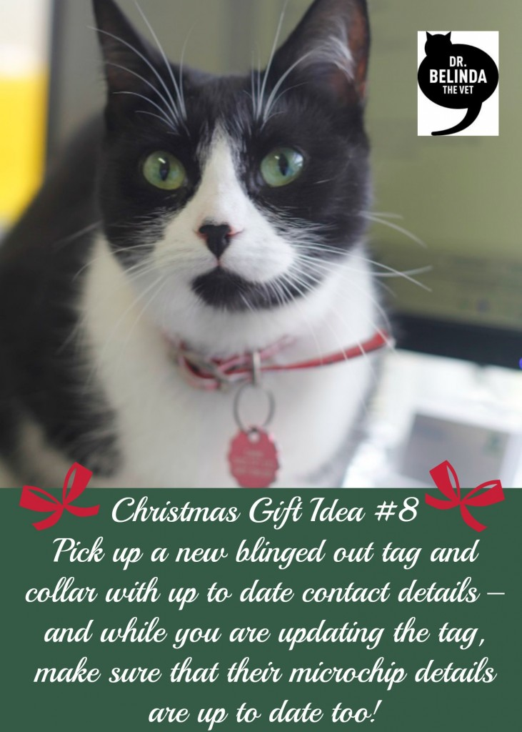 Christmas Gift idea - Pick up a new blinged out tag and collar with up to date contact details – and while you are updating the tag, make sure that their microchip details are up to date too!