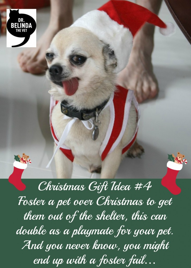 Gift Idea 4 - Foster a pet over Christmas to get them out of the shelter, this can double as a playmate for your pet. And you never know, you might end up with a foster fail…