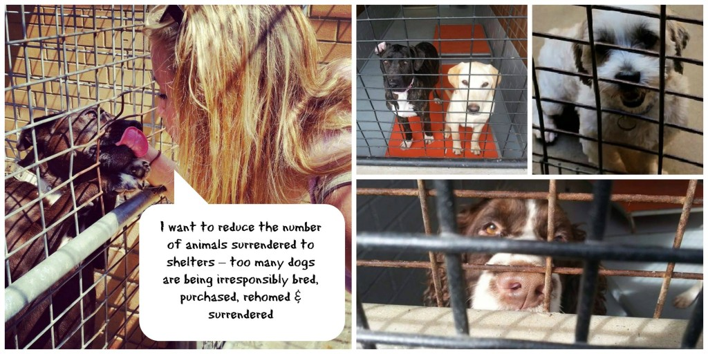 Reduce the number of animals surrendered