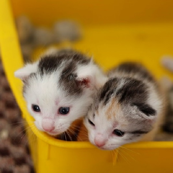Twice as much cuteness with these little kittens