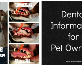 Dental information for pet owners