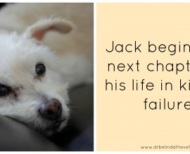 Jack begins the next chapter of his life in kidney failure