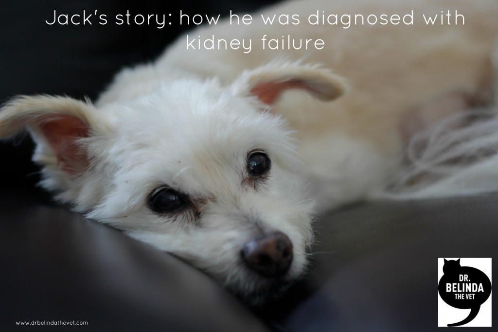 Jacks story - a dog with kidney failure