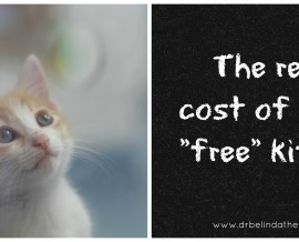 "The real cost of your ""free"" kitten"