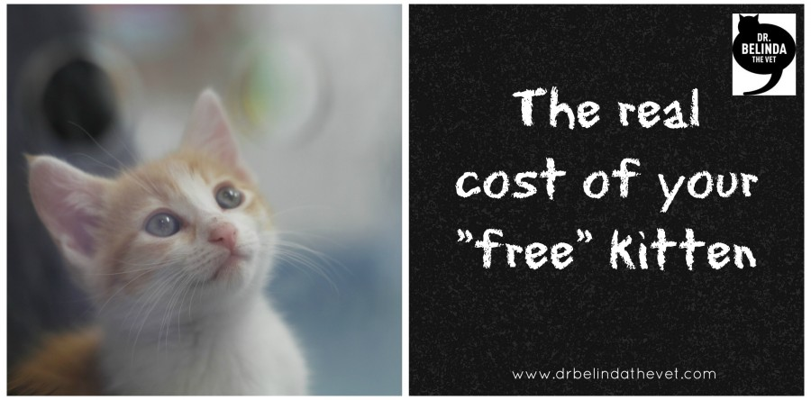 The real cost of your