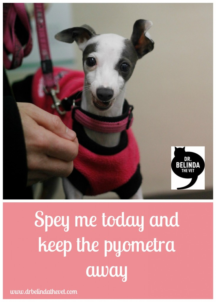 spey me today & keep the pyometra away