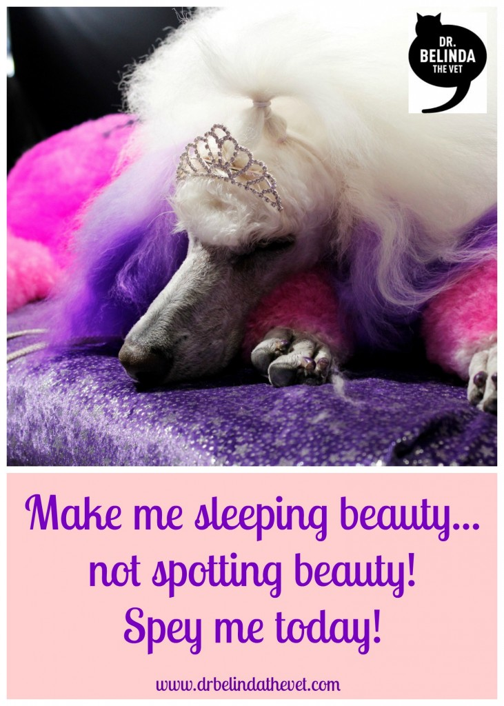Make me sleeping beauty, not spotting beauty - spey me today