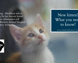 New Kitten? What you need to know!