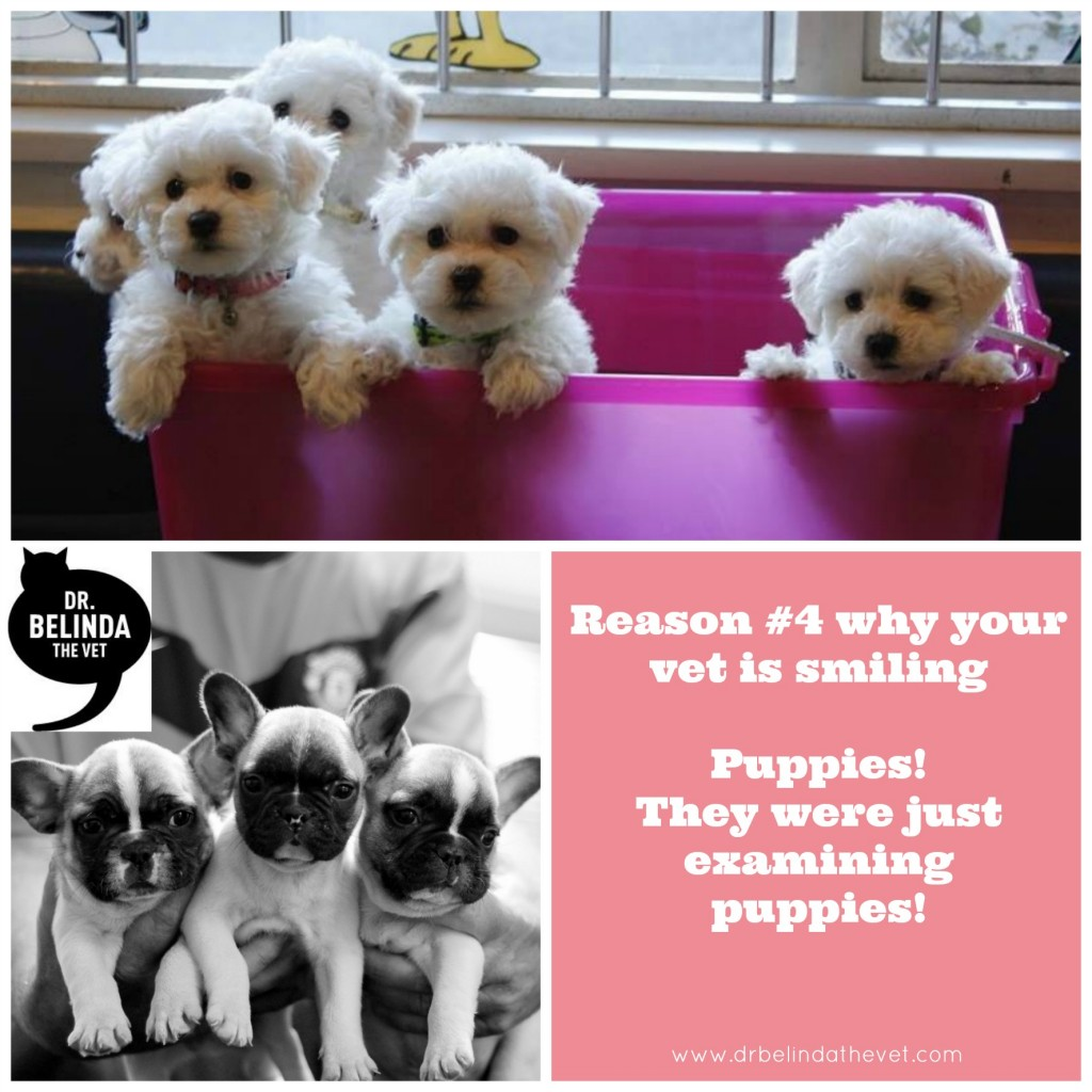 Reason 4 why your vet is smiling