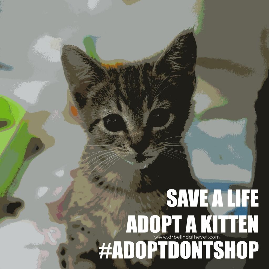 Safe a life adopt a kitten