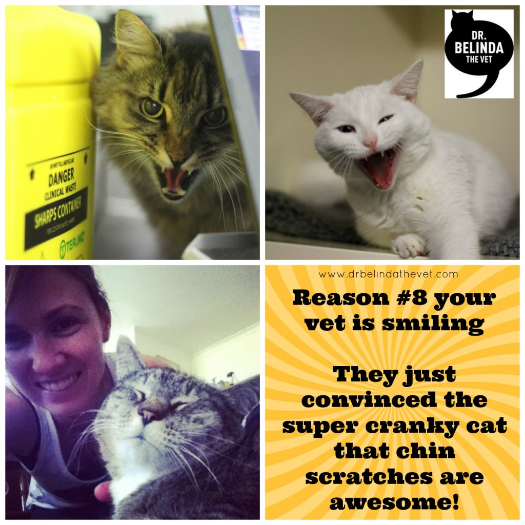 reason 8 your vet is smiling