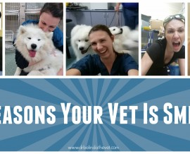 13 Reasons your vet is smiling