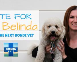 Dr Belinda – The New Bondi Vet…