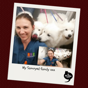 New Bondi Vet - Samoyed Family