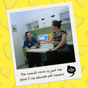 New Bondi Vet - Consult room